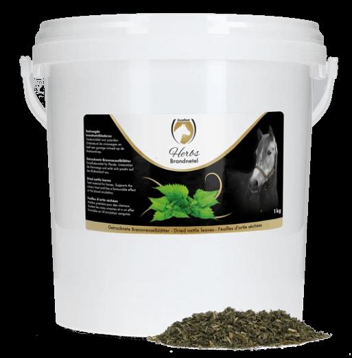 excellent-herbs-Brennnessel