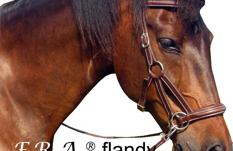 F.R.A. flandy
