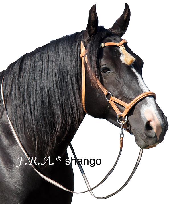 F.R.A. shango western look sidepull