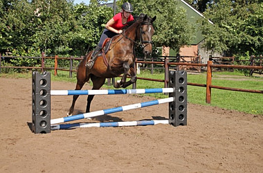 Horse Cube