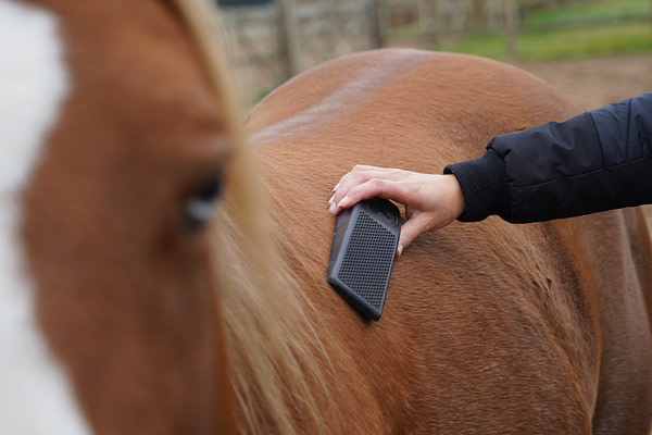 Excellent Horse Grooming Borstel 4